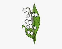67 670574_how to draw a lily of the valley